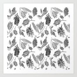 Black and White Australian Native Flowers Art Print
