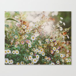 Meadow Wild Flowers Canvas Print