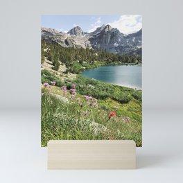 Sierra Alpine Wildflowers Mini Art Print