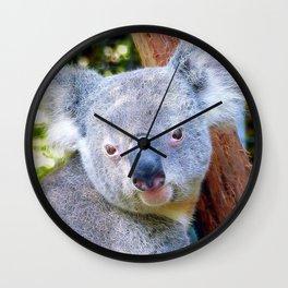 Extraordinary Animals- Koala Wall Clock