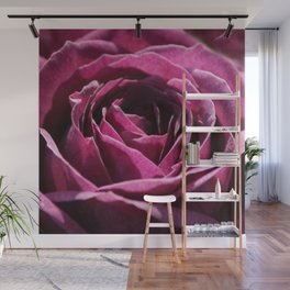 Deep Plum Purple Rose Center Roses Bud Pretty Cute Photo Realism Wall Mural