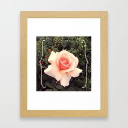 A rose by any other name Framed Art Print