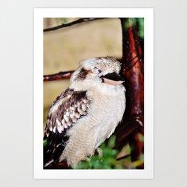 Sleeping Kookaburra Art Print