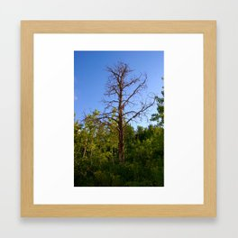 Old Lonely Tree Framed Art Print
