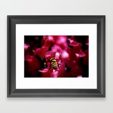 Busy Bumblebee Framed Art Print