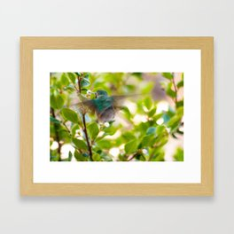 Hummingbird Summer Blur photography by CheyAnne Sexton Framed Art Print