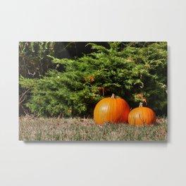 Pumpkins! Metal Print