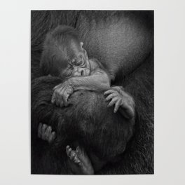 Newborn Baby Gorilla Poster