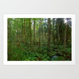 Morning sunlight in a wild  forest Art Print