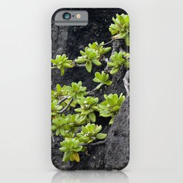 Wild Hawaiian Green Succulents Growing From Lava Rock iPhone Case