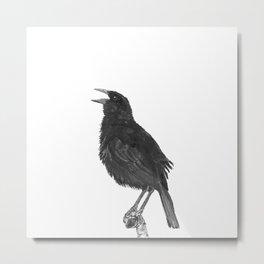 Tordo - Blackbird Metal Print