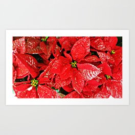 Pretty Poinsettia Art Print