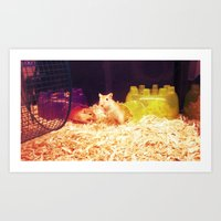 hamster Art Prints featuring Hamster by Lungwort