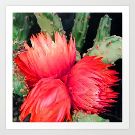 Vibrant Red Cactus Flowers Art Print