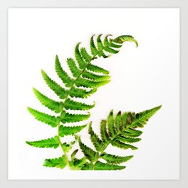 Fern on white Art Print