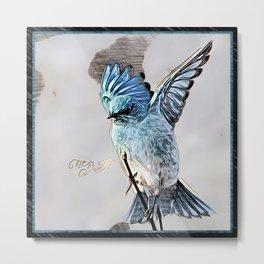 Bird Models: Mountain Bluebird 01-02 Metal Print