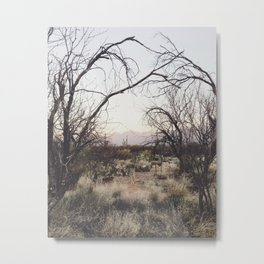Coyote Canopy Metal Print