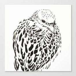 Gyrfalcon (Falcon) Canvas Print