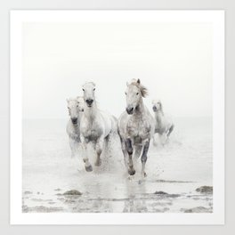 Camargue White Horses Running in Water - Nature Photography Art Print