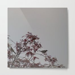 Birds on rowan tree Metal Print