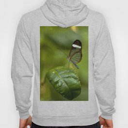Transparent butterfly Hoody