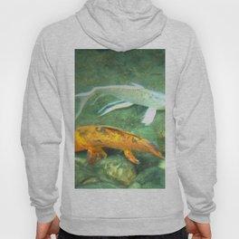Coy Fish Hoody
