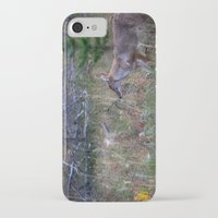 coyote iPhone & iPod Cases featuring Coyote by Stu Naranch