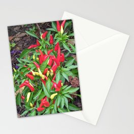 Chili Pepper Plant Stationery Cards