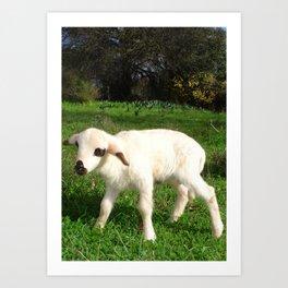 A Newborn Lamb Finding Its Feet Art Print