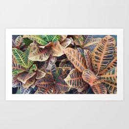Crotons Art Print