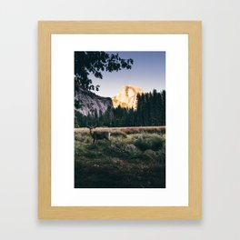 Yosemite Valley Buck Framed Art Print