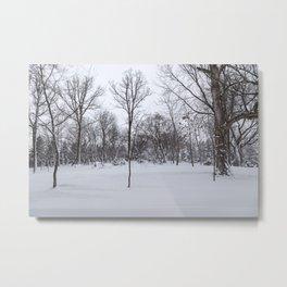 Beauty of Winter 13 Metal Print