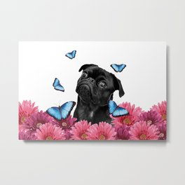 Back pug with pink Gerber and blue morph butterfies Metal Print
