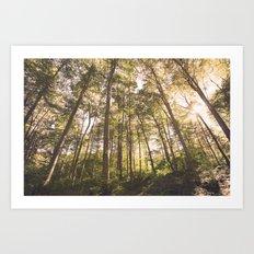 woodland 3428 Art Print