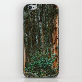 Eucalyptus Trees Near Berkeley California iPhone Skin