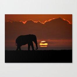 Elephant At Sunset Canvas Print