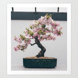 Mini Cherry Blossom Art Print
