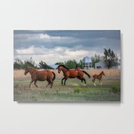 Born to Run - Horses Break Into a Gallop in Texas Metal Print