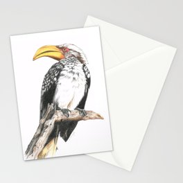 Southern Yellow-Billed Hornbill - Colored Pencil Stationery Cards
