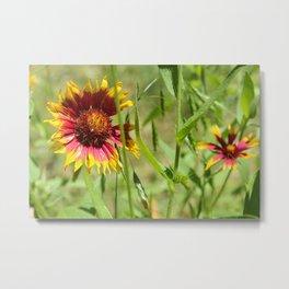 Sunbathing Wildflower Metal Print