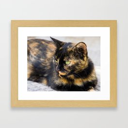Emerald Eyes Framed Art Print