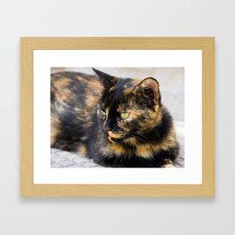 Emerald Eyes Framed Art Print