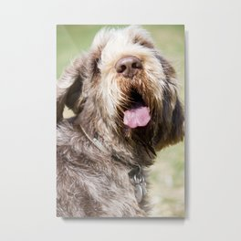 Brown Roan Italian Spinone Head Shot Metal Print