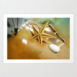Sea shells II Art Print