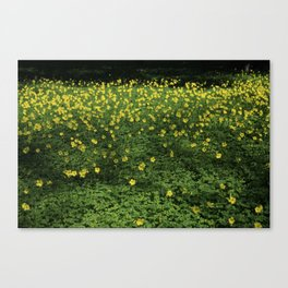 500 Drops of Sun Canvas Print