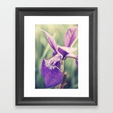 Purple Heart Framed Art Print