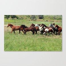 Mustangs on the Prairie Canvas Print