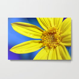 Sunflower against a Bright Blue Sky Metal Print