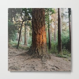 Boulder woods Metal Print