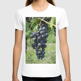 Grapes growing on the vine T-shirt